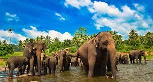 Kcy;артинки по запросу srilanka