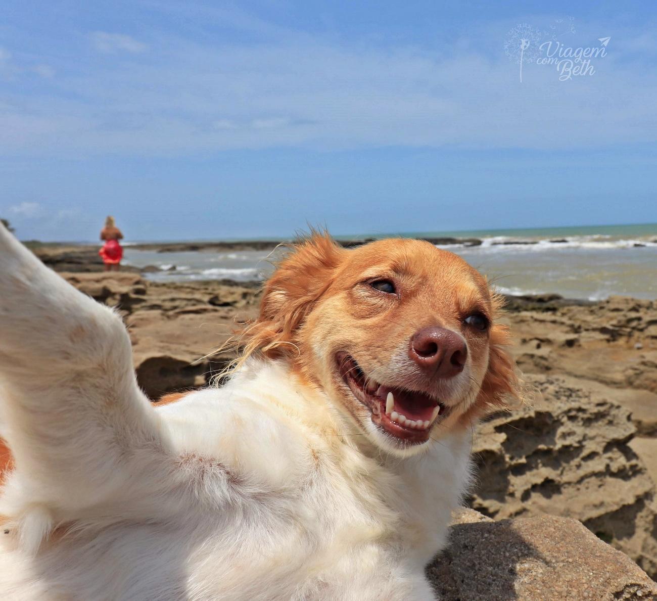 Dicas para tirar fotos incríveis do seu dog, Nina Dog Aventuras