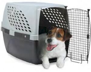 Cão crate.jpg