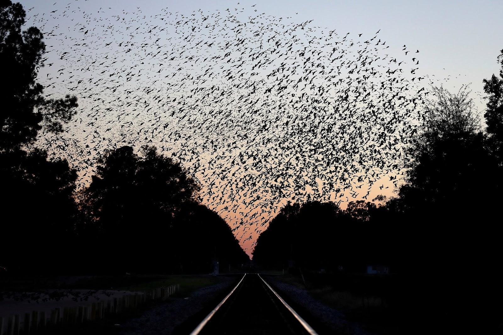 Giving the avian endangerment crisis perspective