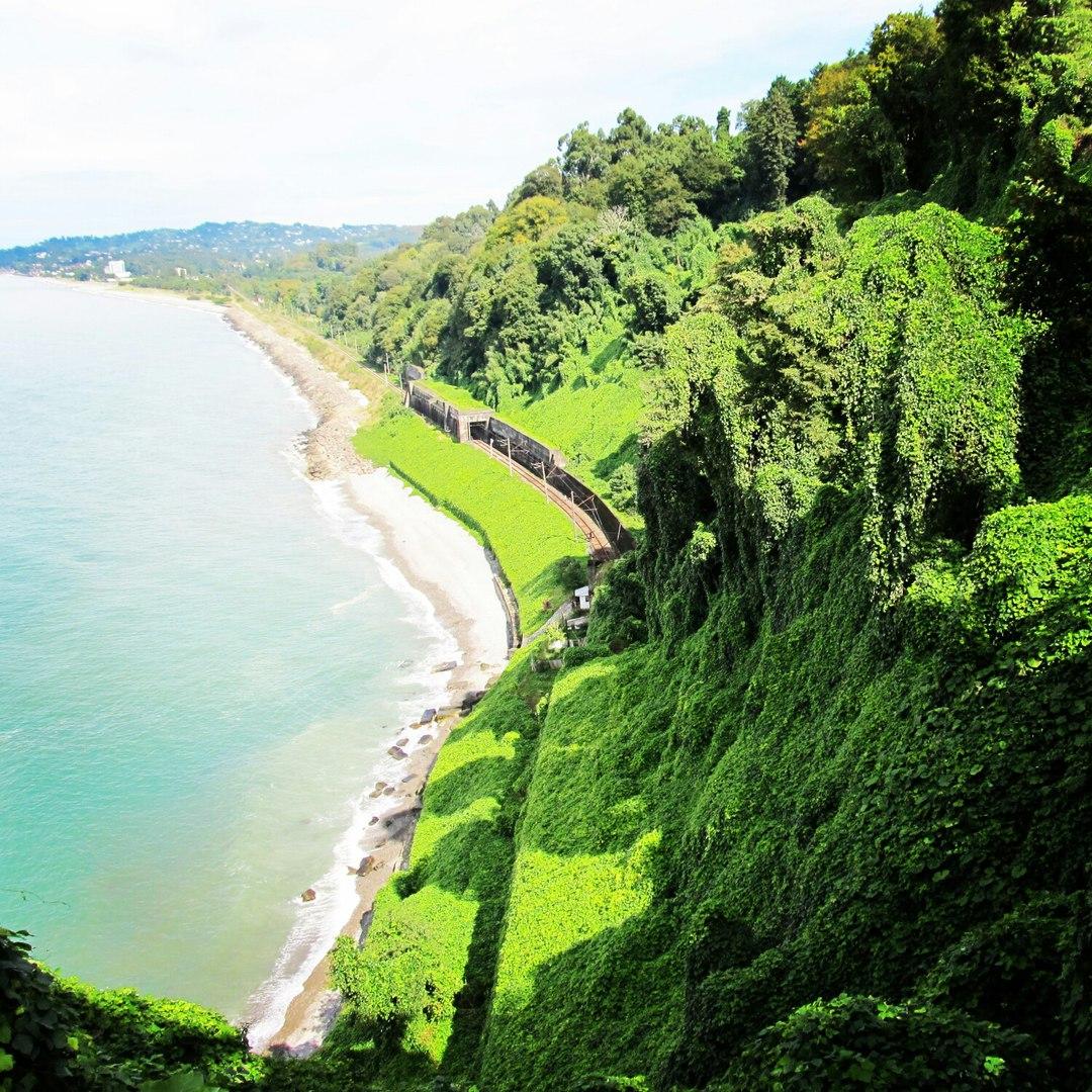 дивовижне море та зелень в ботанічному саду
