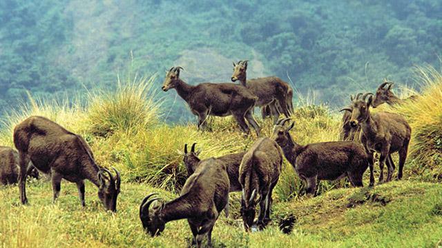 Image result for Eravikulam National Park images