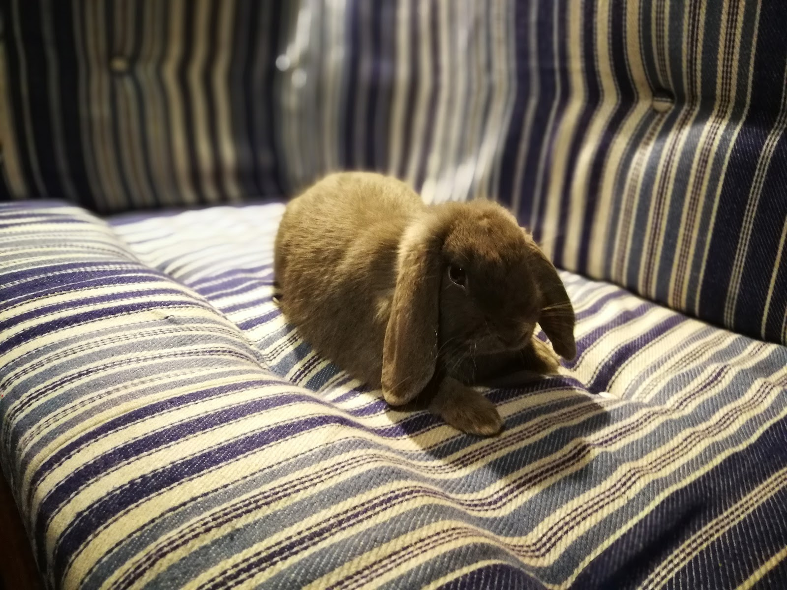rabbit on a boat