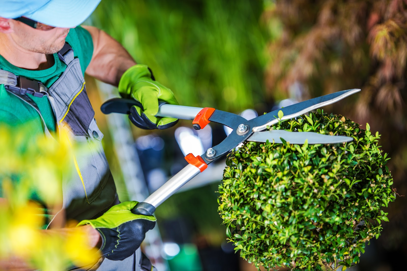 Gardening Services by Affordable Cleaning Service Brooklyn