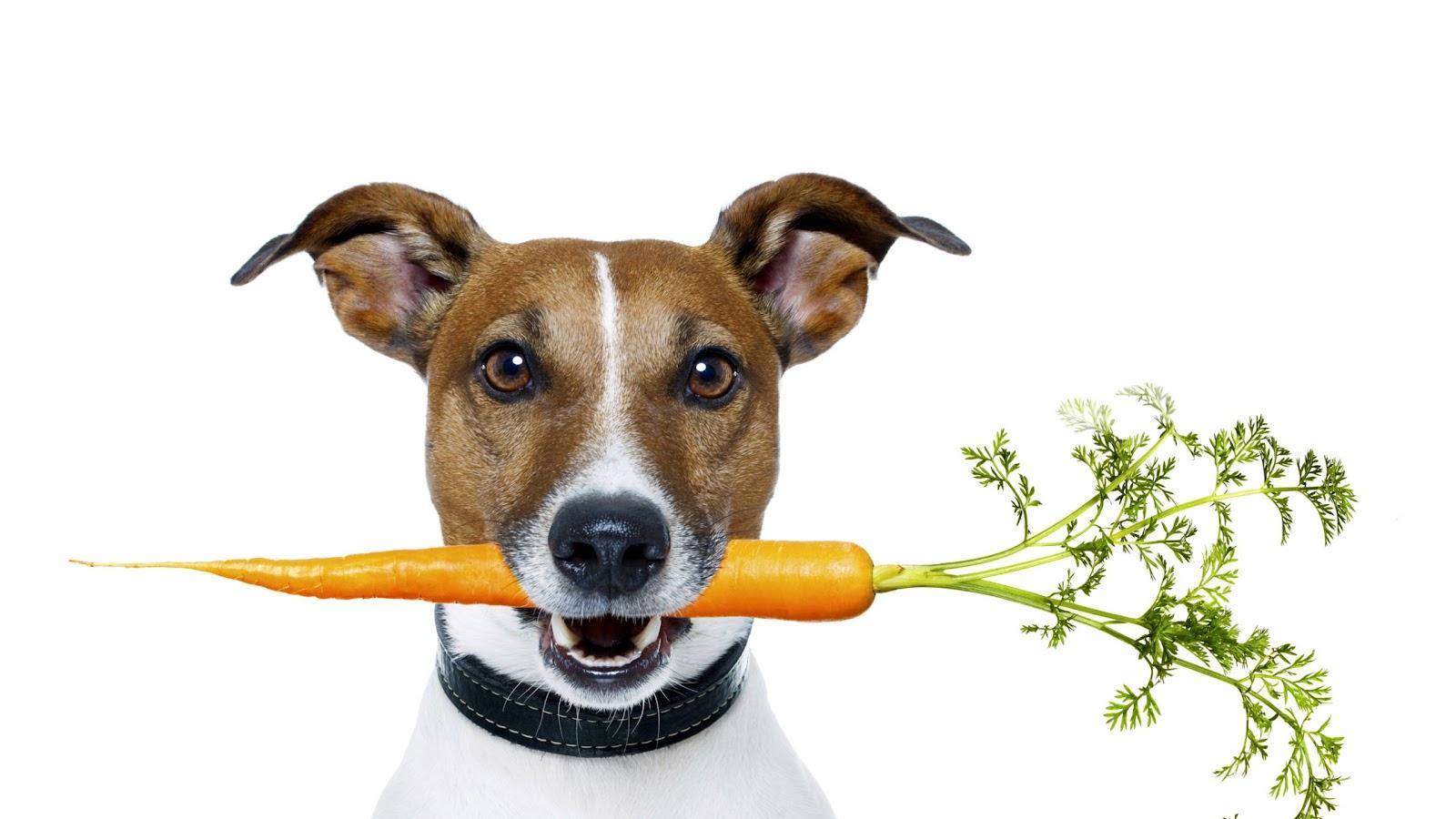 интересное о моркови факты (2).jpg