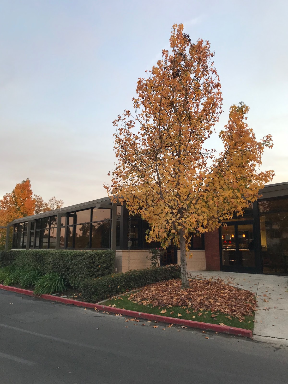The Caf in Autumn