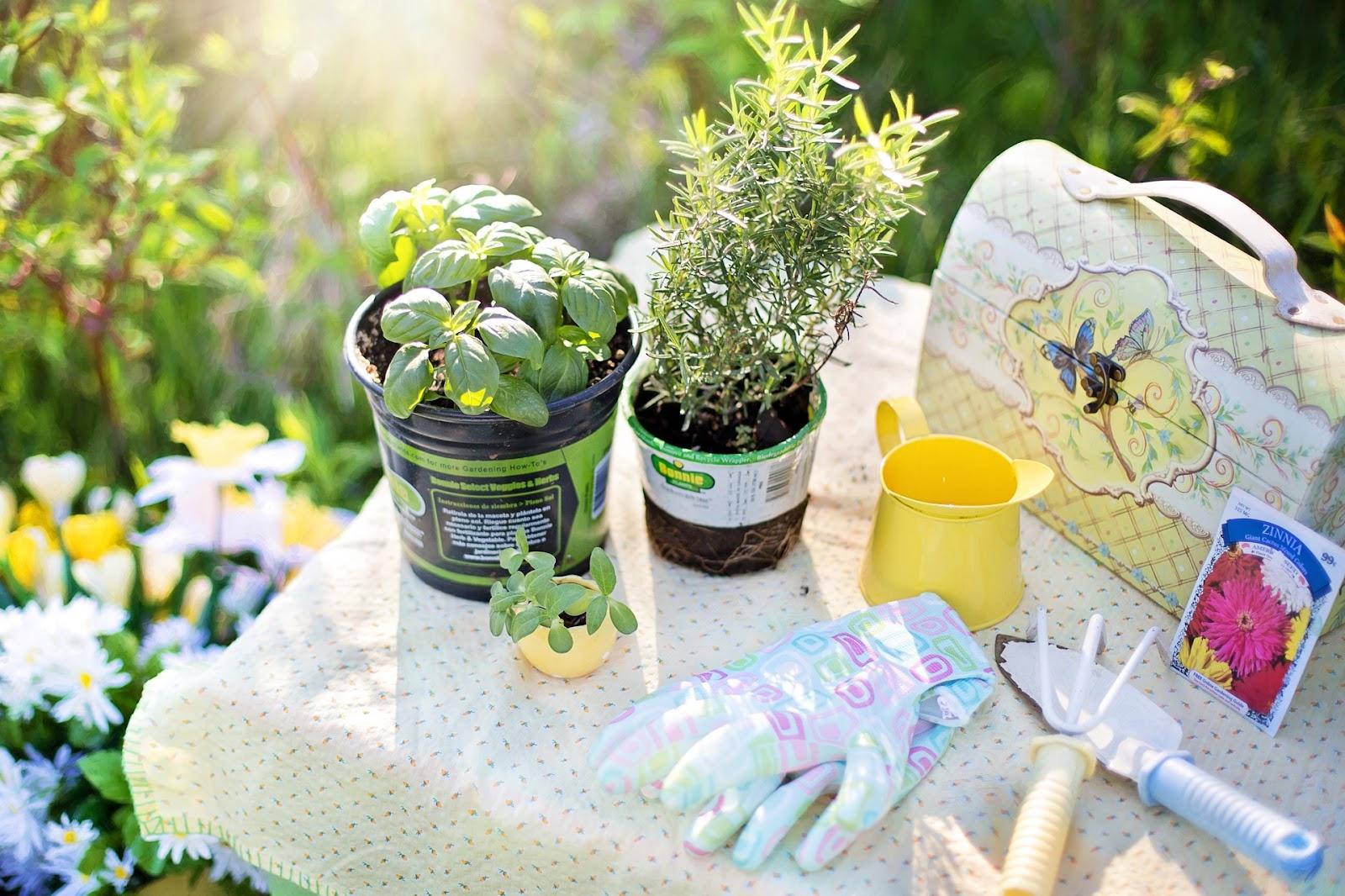 Herbs and gardening supplies