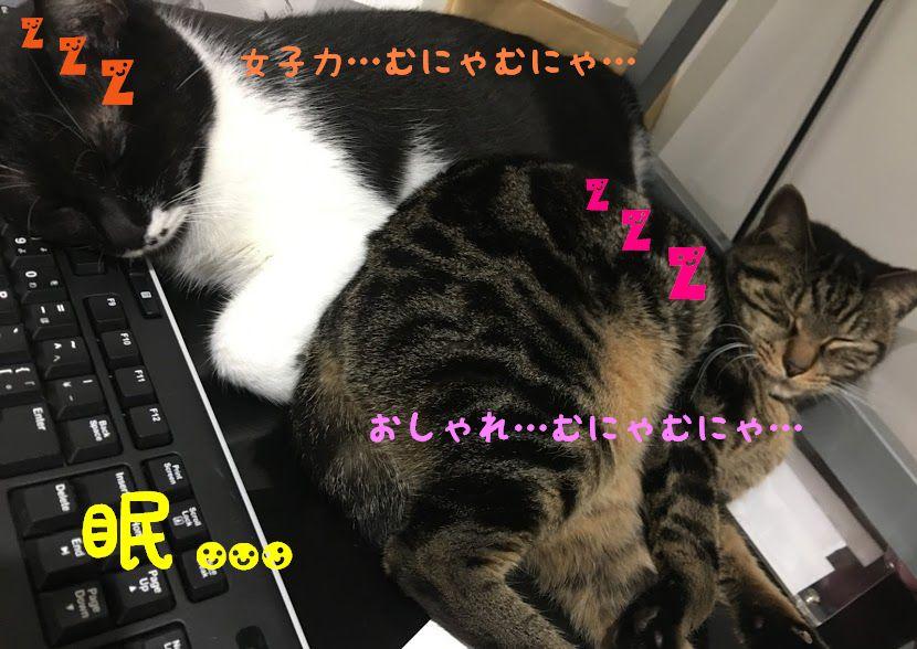 日本と海外の知って楽しい、猫が出てくることわざ
