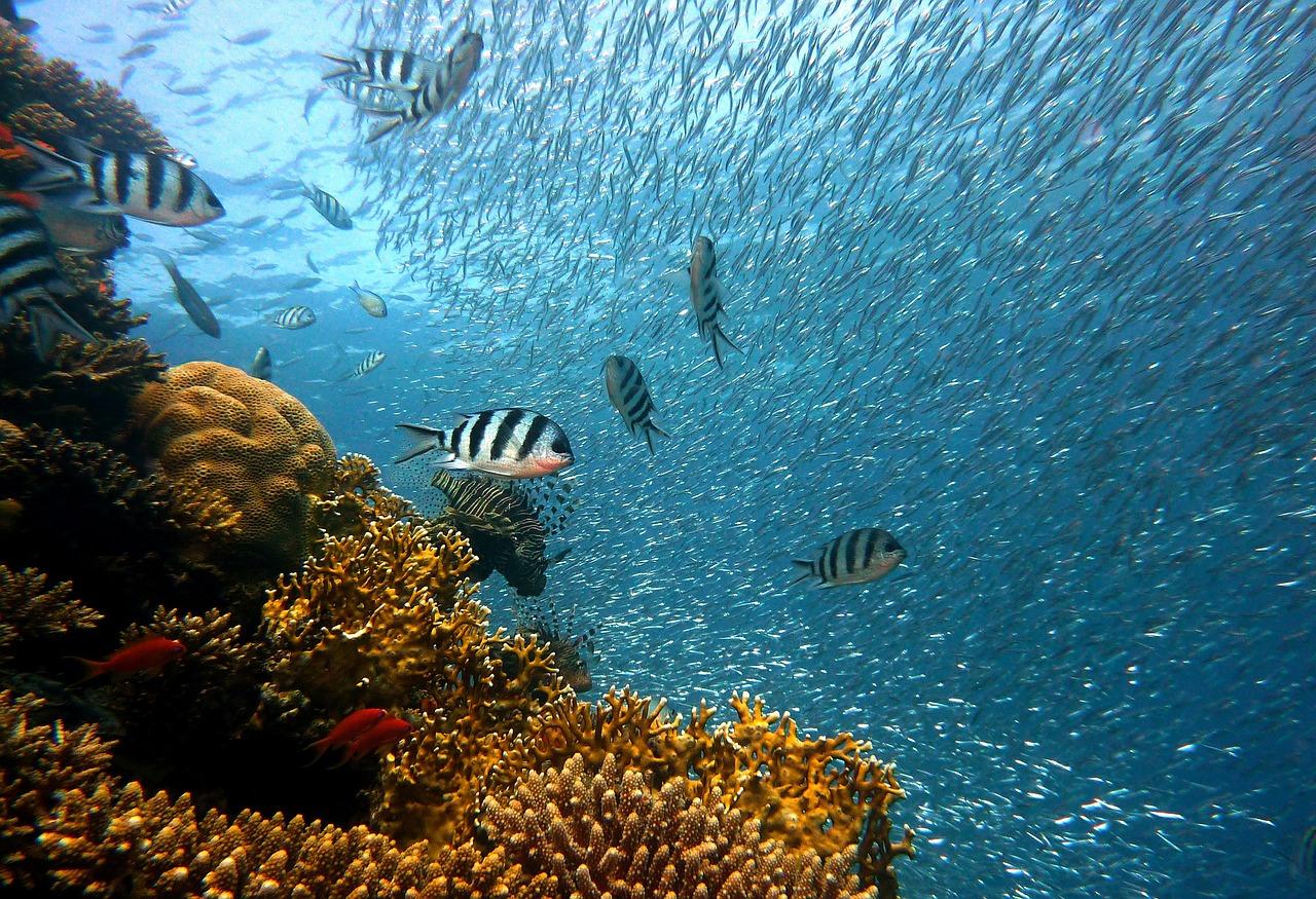 underwater reef coral