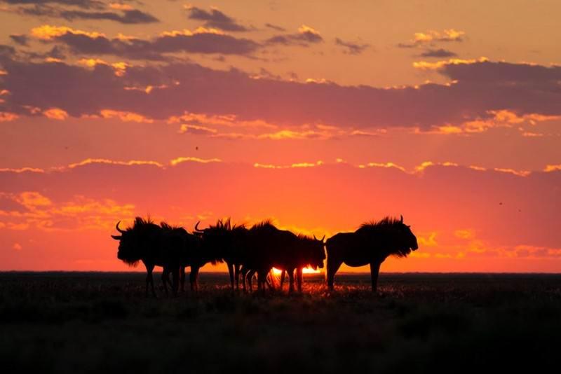 wildbeest-migration-liuwa-plain-national-park.jpg