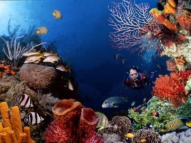 http://2.bp.blogspot.com/_jsNzlxRn2jY/TTZD8HqWM3I/AAAAAAAAARA/cVAjHHoO1zM/s1600/diving-2.jpg