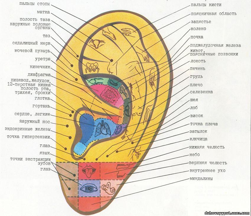 Учебник по юзабилити: Точки соприкосновения