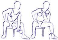 curl concentré pour la musculation des biceps