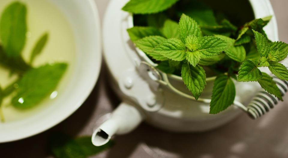 Peppermint, Medicinal Plant, Medicinal Herbs, Mint