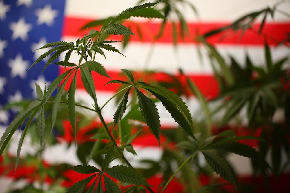 Legalized Marijuana United States