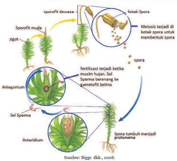 Ipa Kelas 9 Bab 2 Sistem Reproduksi Pada Tumbuhan