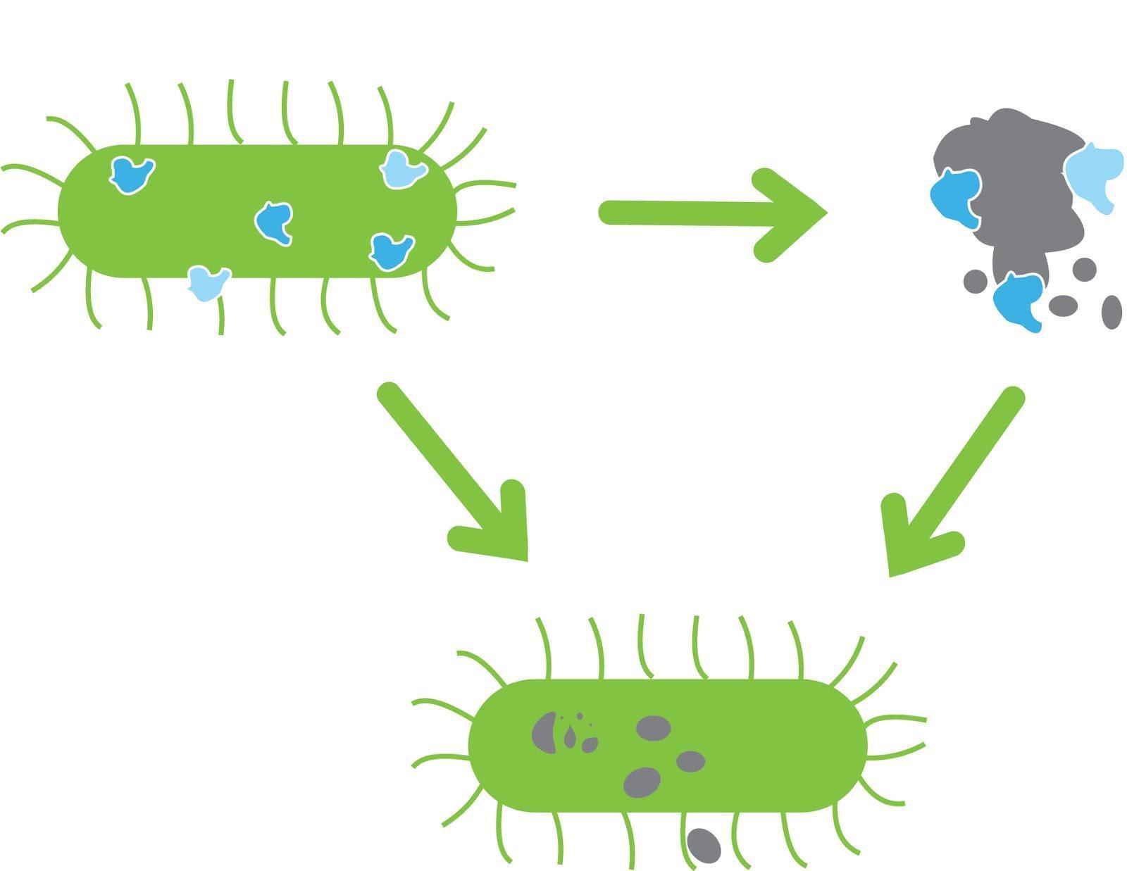 Voeg probiotica toe na een desinfectie