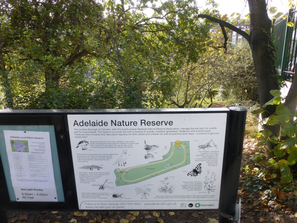 North London Camden Natural Reserve