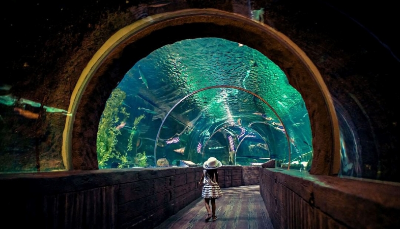 a young girl walks through the Ocean Tunnel at SEA LIFE Aquarium in Mall of America