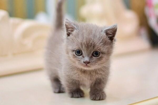 Top 8 các giống mèo đẹp được yêu thích nhất hiện nay 2020