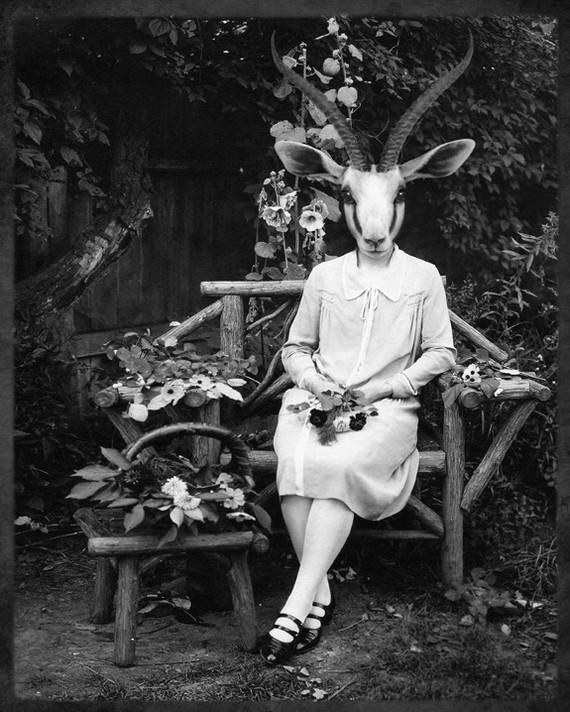 8x10 Adelaide Gazelling - Gazelle Photographic Art Print