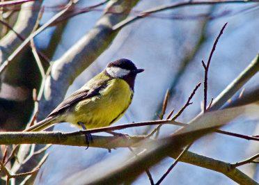 Birdwatching campsite Sussex