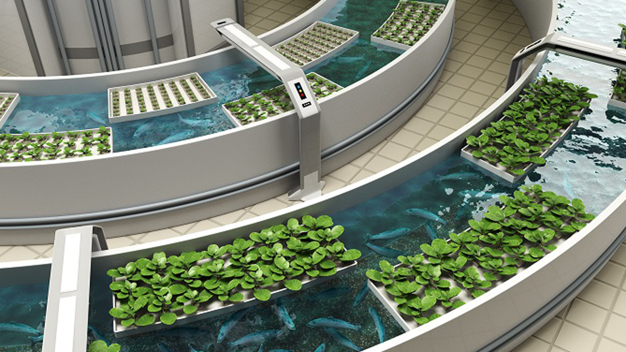 Извор: https://research.umn.edu/inquiry/post/students-lead-research-emerging-aquaponics-industry