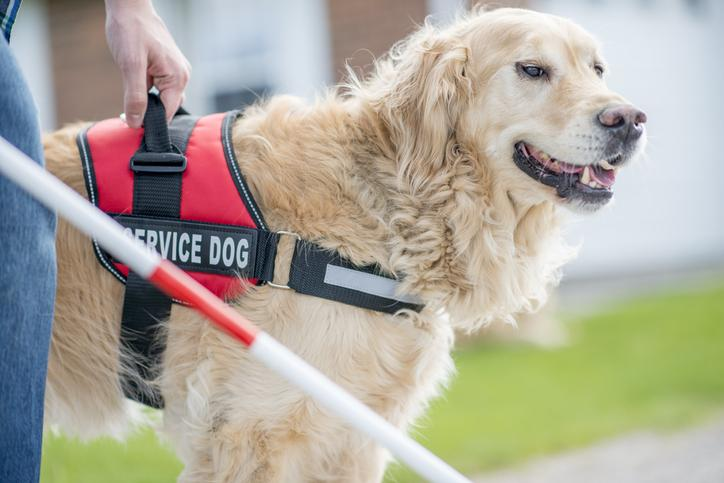 Service Dogs 101: Everything You Need To Know About Service Dogs jobs for dogs in human territory