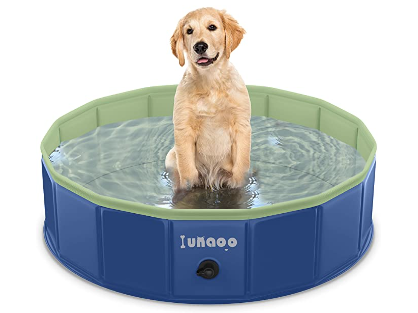 golden lab in dog swimming pool