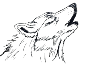 Draw A Howling Wolf