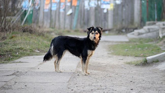 Дворняжки или обычные дворовые беспородные собаки