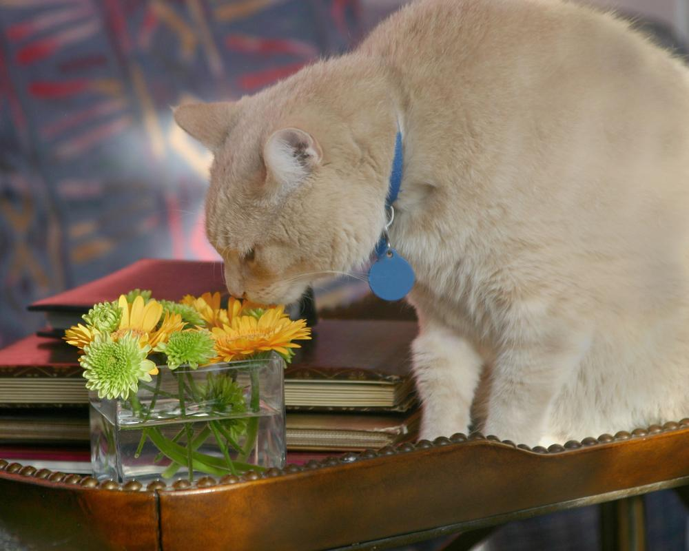 adult-male-cat-smelling-flowers.jpg