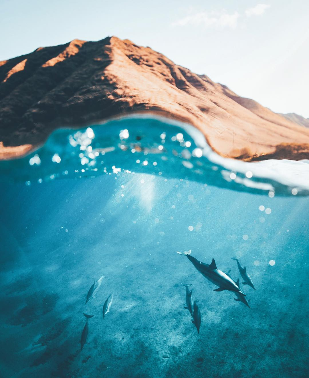 Swim with dolphins (#17 on 26 best things to do on Oahu)