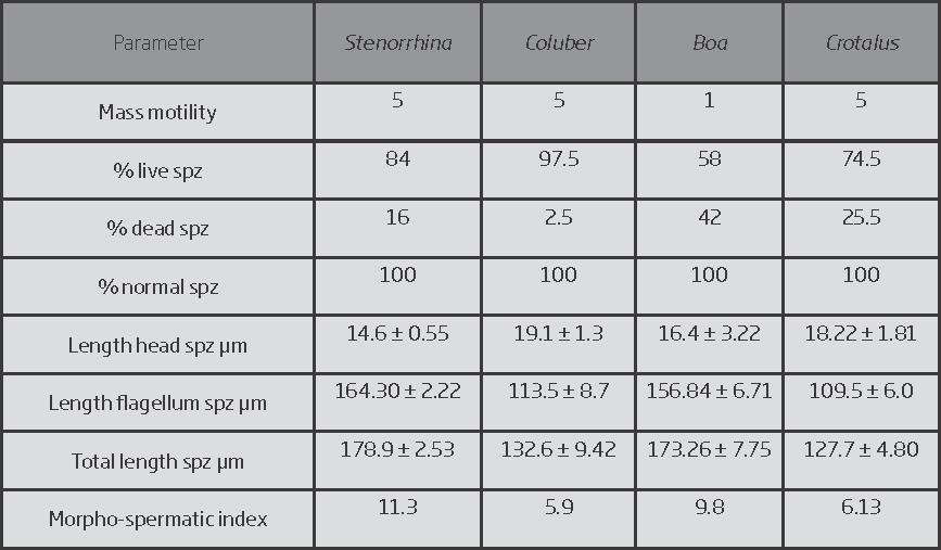 Evaluation and measurements of the spermatozoa.