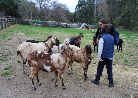 100 things to do in melbourne with kids collingwood childrens farm