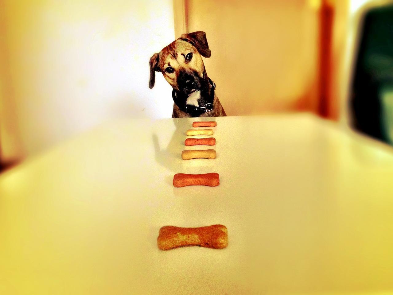 enseñar sobre el mejor alimento para perros cachorros