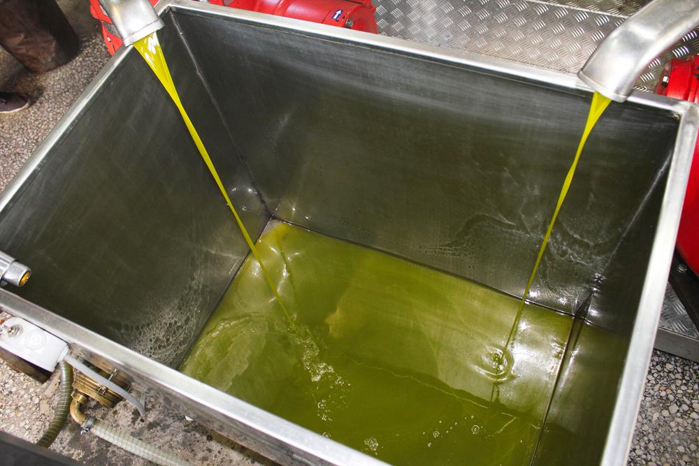 Falta de equipamento nacional para extração de azeite é um dos obstáculos para expansão do setor. (Fonte: Shutterstock)