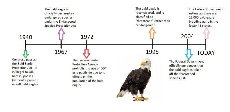 Image result for population of bald eagle