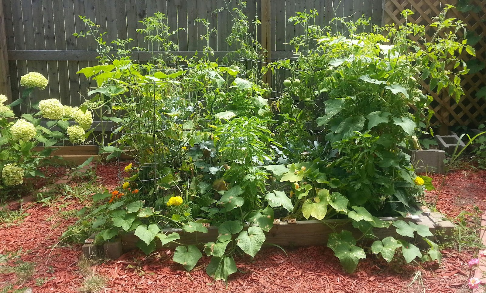 raised bed vegetable garden picture