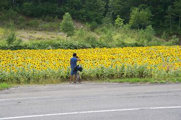 国道233号・ひまわりインターチェンジ付近