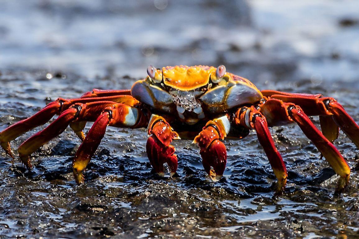 What is a Crustacean? - WorldAtlas