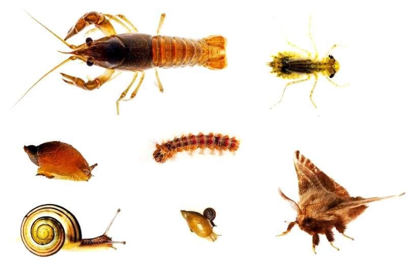 Entoproct (invertebrate) image | britannica. Com.