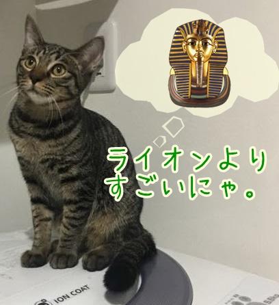 猫がゴロゴロ喉を鳴らすのはなぜ?人間にも効果がある?