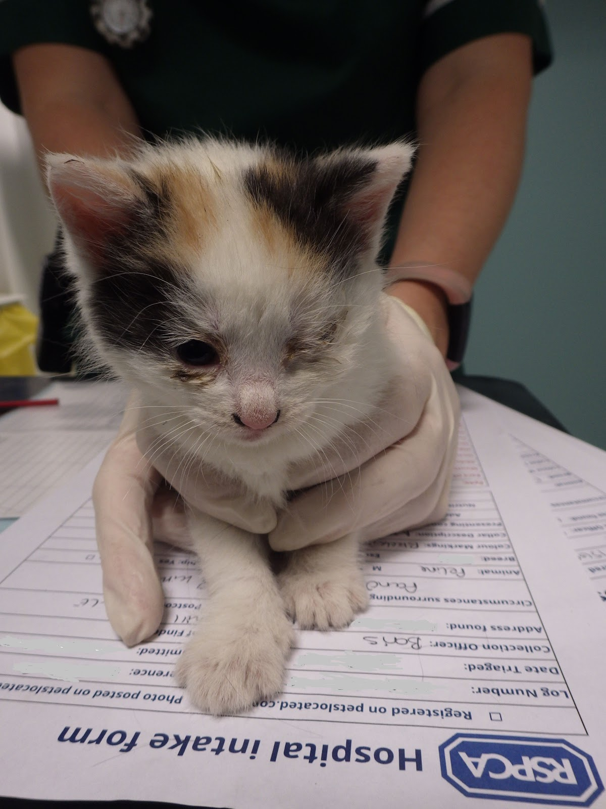 Poor Kittens Left For Dead