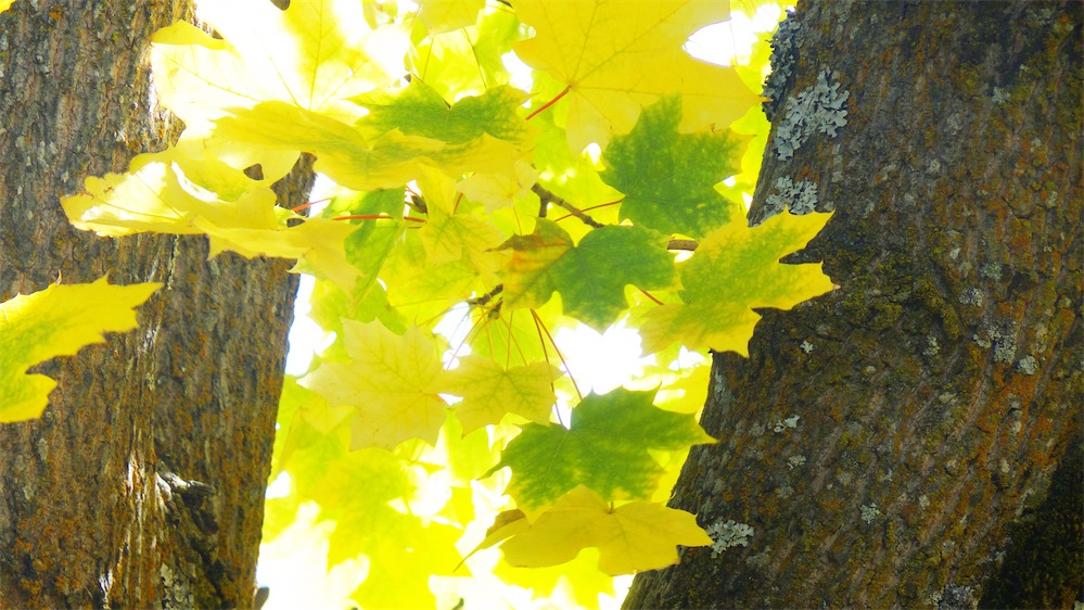 Mossy Tree Crotch .jpg