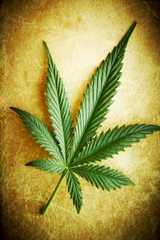 Marijuana Live Wallpaper Apk Videos And Images