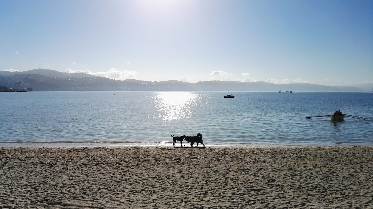 Two dogs sniff hello on at Oriental Bay during a morning run