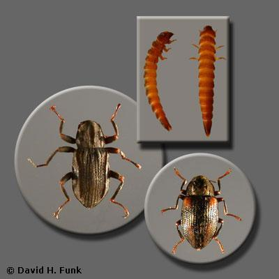 http://www.stroudcenter.org/research/projects/schuylkill/taxa/images/taxon14.jpg
