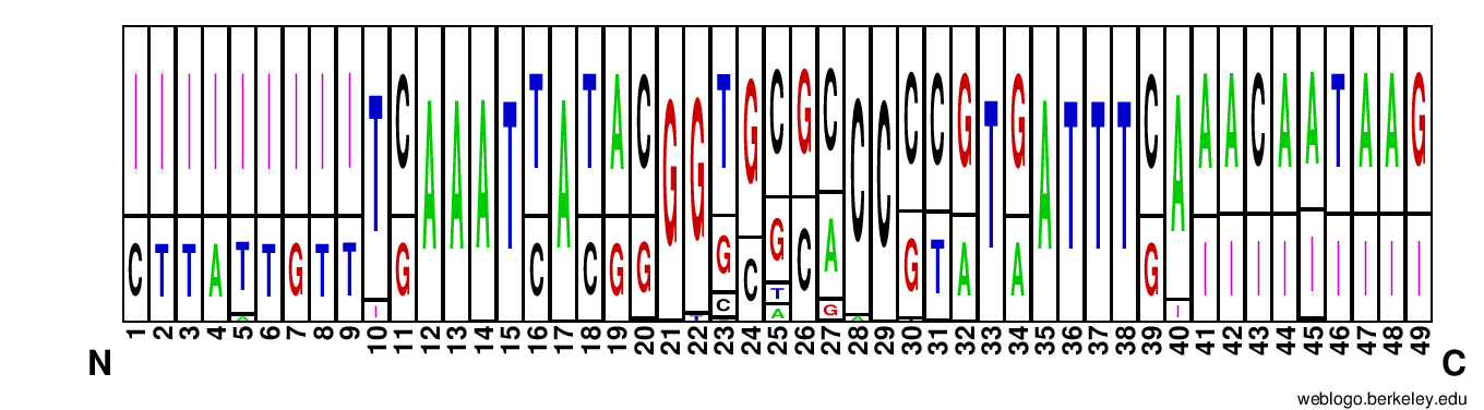 WebLogo Plot of universal promoter sequences.