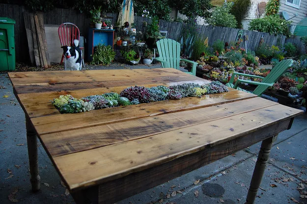 wooden pallet table with succulents